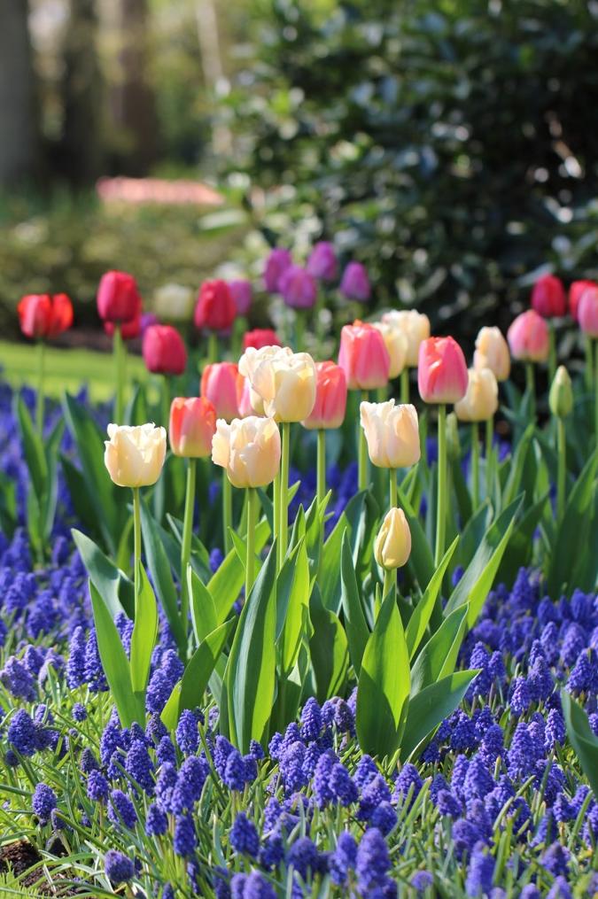 6 tips for planning ahead for an eye popping spring bulb for Spring bulb garden designs